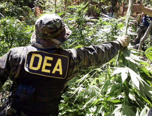 DEA approves PTSD marijuana study